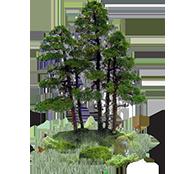 Biodiversity Plantings